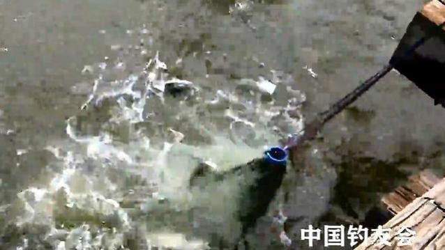 钓鱼:站在桥上撒了一网,旁边钓鱼人的眼神好怪异