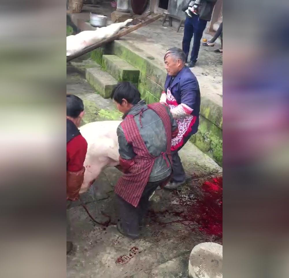 外婆记忆:巴中农村杀猪汤猪兑水场景让人回到儿时