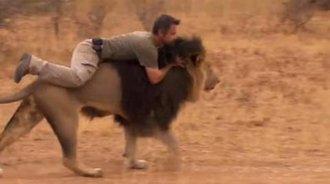 佩服!男子爬在狮子的背上,我从未见过如此勇敢之人!
