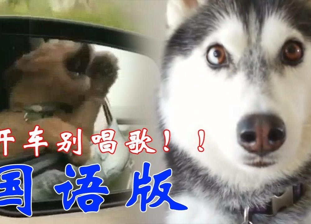 【国语版】二哈:开车别唱歌!!!
