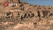 埃及法老王猎犬面临灭绝危险