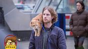 屌丝看电影:流浪猫鲍勃#20181102