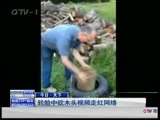[今日-青岛]今日 天下 轮胎中砍木头视频走红网络