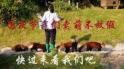 小熊猫:国庆节我们不放假,快过来看我们吧,我们在广州等你!