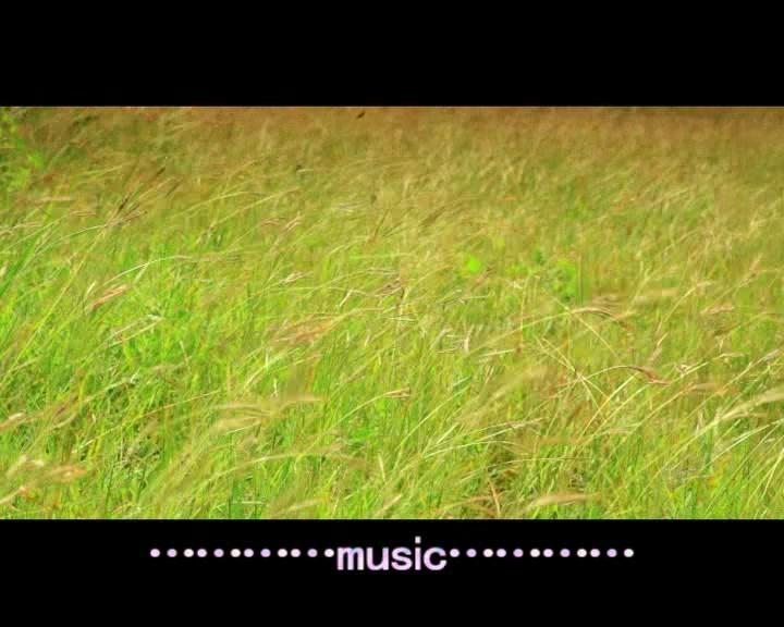【喜乐洋洋】 小草