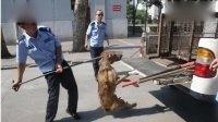 西安32岁女子狂犬病发作身亡 全城打狗
