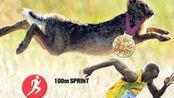 博尔特百米最快成绩为9.6秒,那和野生动物相比,排第几名呢?