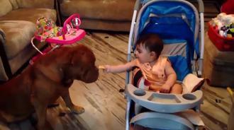 宝宝喂狗狗饼干吃,好有爱