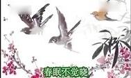 020春晓-古诗配乐朗诵