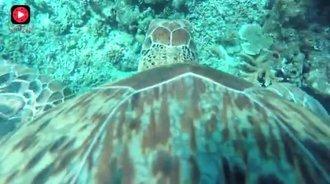 科学家在一只海龟的背上装了摄像头,然后拍到了这些画面!