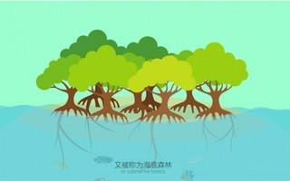【魔格原创】百秒认识红树林